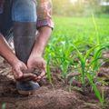 農家へ転職するには?農業の年収や働くことのメリットを解説